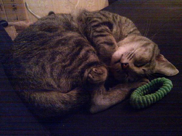 Матисс устал выть