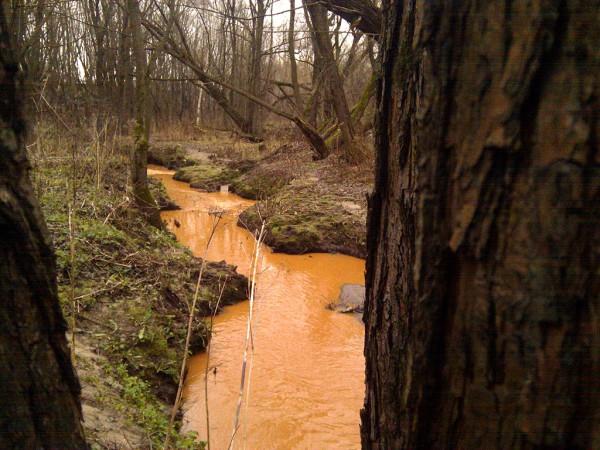 Оранжевая река из-за деревьев